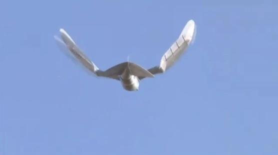 Raadioteel juhitav lind